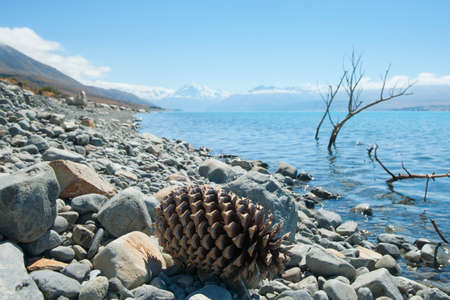 Pine cone and branches on lake edge as scenic or tourism background image Lake Pukaki in Canterbury New Zealand. 版權商用圖片