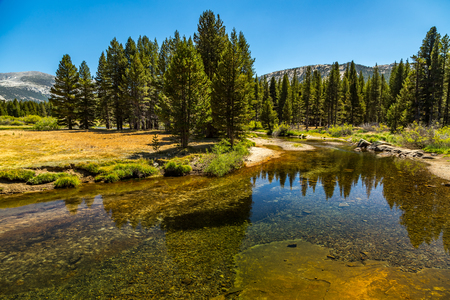 The Tuolumne River originates in Yosemite National Park, high in the Sierra Nevada, as two streams. The 7-mile Lyell Fork rises at the Lyell Glacier below Mount Lyell, the highest peak in Yosemite National Park, and flows north through Lyell Canyon. The 5 Stock Photo