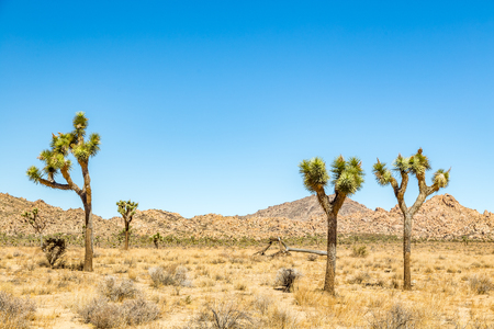 Joshua Tree National Park is a vast protected area in southern California. Its characterized by rugged rock formations and stark desert landscapes. Stock Photo