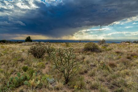 cholla: In meteorology, virga is an observable streak or shaft of precipitation that falls from a cloud but evaporates or sublimates before reaching the ground.