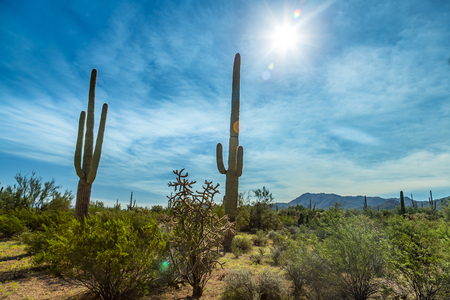 Saguaro National Park in southern Arizona is part of the National Park System in the United States. The park preserves the desert landscape, fauna, and flora in two park districts, one east and the other west of Tucson.