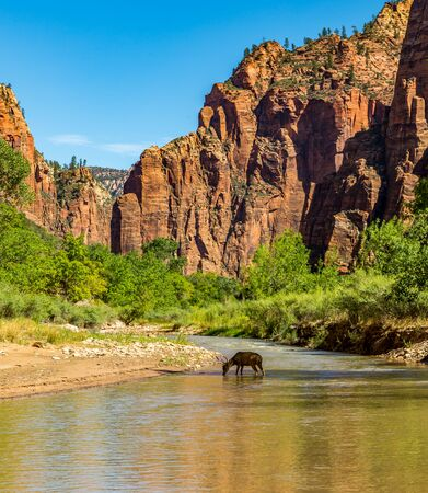 Zion National Park is a southwest Utah nature preserve distinguished by Zion Canyonâ??s steep red cliffs. Zion Canyon Scenic Drive cuts through its main section, leading to forest trails along the Virgin River.
