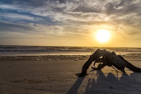 A large section of driftwood shares the sunrise at Amelia Island, Florida.