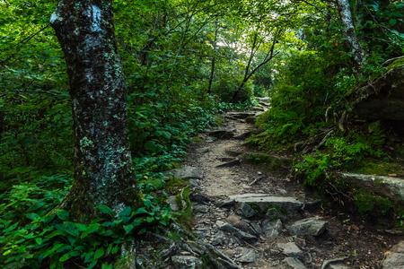それとアパラチアン トレイルは、ノースカロライナ州、テネシー州のスモーキー山脈を交差させます。