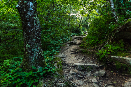 The Appalachian Trail as it crosses the Smoky Mountains in North Carolina and Tennessee. Фото со стока