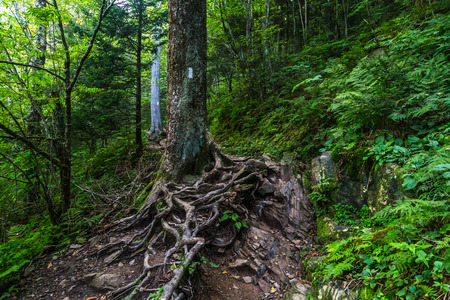 The Appalachian Trail as it crosses the Smoky Mountains in North Carolina and Tennessee. Stock Photo