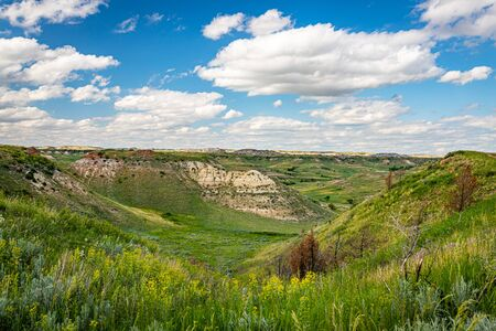 Wildflowers and green summer grass dominate the landscape in the South Unit of Theodore Roosevelt National Park near Medora, North Dakota.
