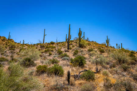 Desert views along Arizona State Rout 88, a former stagecoach route known as the Apache Trail. Stock Photo