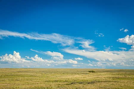 Prairies are ecosystems considered part of the temperate grasslands, savannas, and shrublands biome by ecologists, based on similar temperate climates, moderate rainfall, and a composition of grasses, herbs, and shrubs, rather than trees, as the dominant vegetation type. Foto de archivo