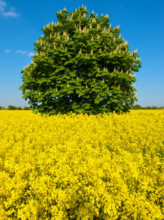 tree in field of yellow photo