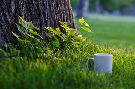 A solo blank white coffee mug sitting under the trees of the local park. Stock Photo