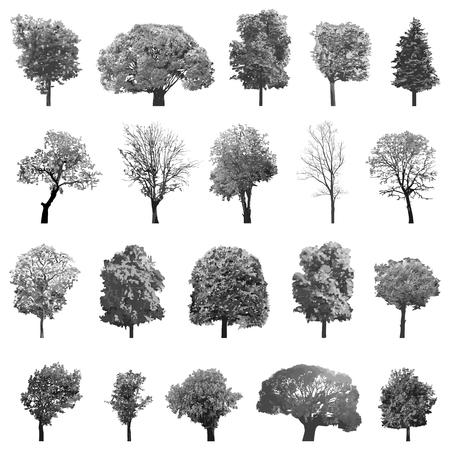 孤立木のベクトル コレクション セット