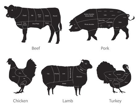 Illustration vectorielle des coupes de viande isolées