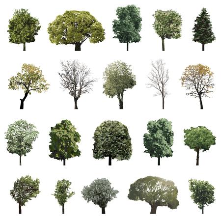 Set van geïsoleerde bomen