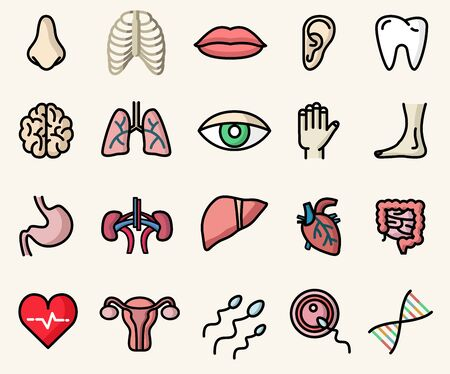 Colorful icons of anatomy and human body parts. Vector isolated illustrations set