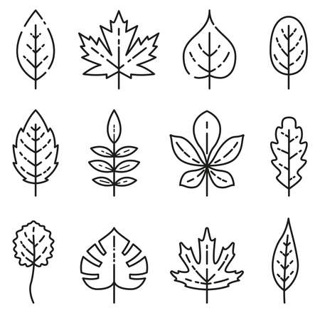Vector illustration of outline isolated leaves icons