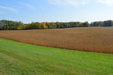 hay field: Hay Field Stock Photo