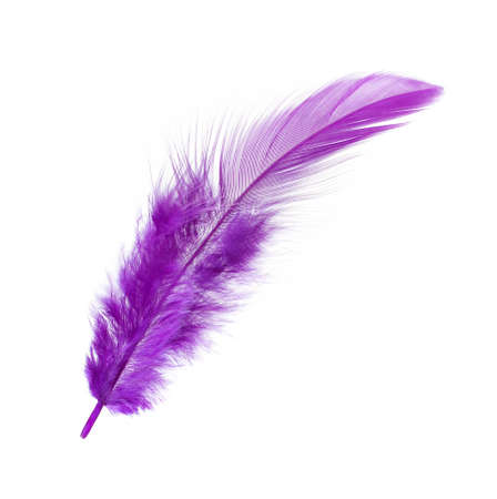One Purple Feather Isolated on White Background