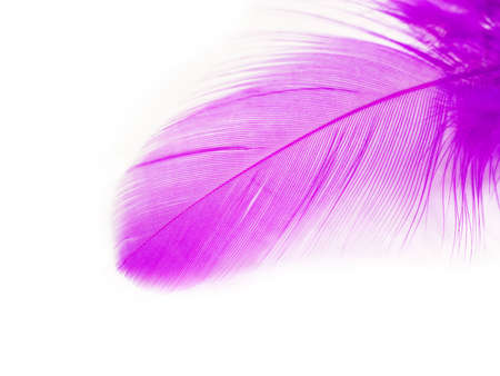 One Purple Feather on White Background. Close-up. Stock Photo
