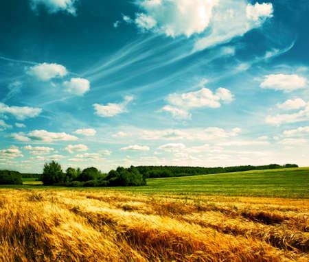 美しい雲の背景の上の村の麦畑 写真素材