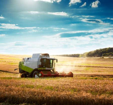 小麦畑のコンバインの収穫作業