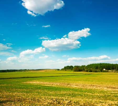 non cultivated: Spring Field on the Background of Beautiful Clouds and Blue Sky Stock Photo