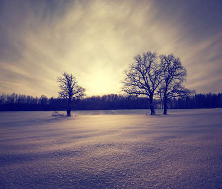 Winter Landscape with Sparkling Snow and Trees  Toned Stock Photo