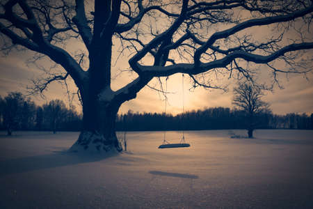 swing seat: Winter Landscape with Abandoned Tree Swing. Solitude Concept. Toned Photo.