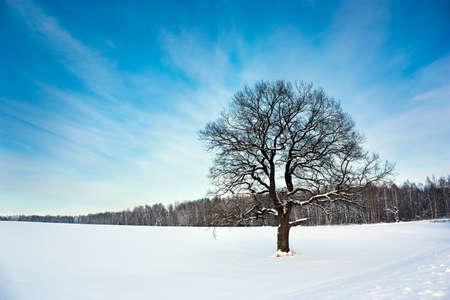 Bare Oak Tree in der Snowy-Gebiet Winterlandschaft mit Textfreiraum