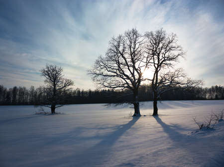 Winter Landscape with Snowy Field and Trees at Sunset