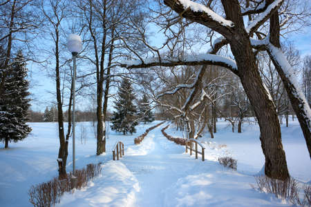 Winter Landscape with Alley and Snow Covered Trees in Park