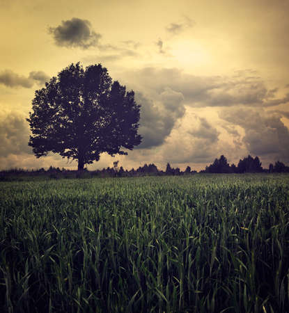 Dark Landscape with Lonely Tree and Moody Sky. HDR Cloudscape. Toned Photo. Banco de Imagens