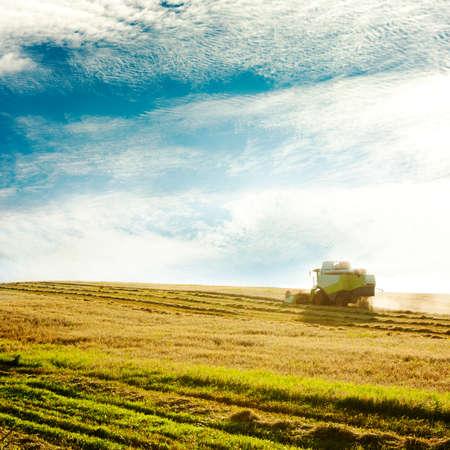 cosechadora: La recolección de Trabajo combinan en el campo de trigo Agricultura Concept Espacio foto Tonos
