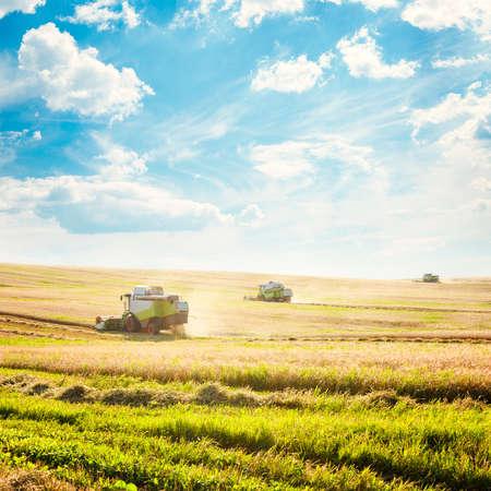 Werken Oogsten Combineert in het Gebied van de Tarwe Landbouw Concept Copy Space getinte foto