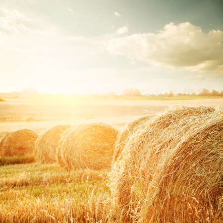 hay bales: Summer Field with Hay Bales on the Background of Beautiful Sunset  Agriculture Concept  Stock Photo