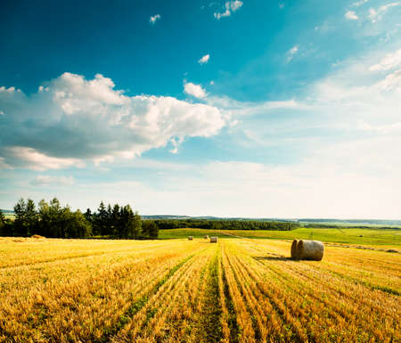 Summer Landscape with Mown Wheat Field on the Background of Beautiful Clouds  Agriculture Concept  Toned Photo  Copy Space  Stock Photo