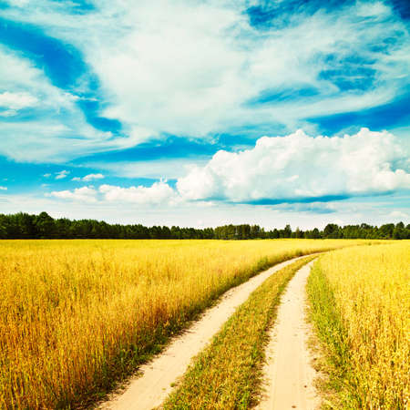 non cultivated: Summer Landscape with Oat Field and Country Road on the Background of Beautiful Sky. Agriculture Concept. Toned Photo. Copy Space.