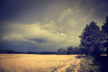 moody sky: Dark Landscape with Field and Moody Sky. HDR Cloudscape. Toned Photo with Copy Space.