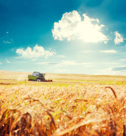 wheat: Working Harvesting Combine in the Field of Wheat. Agriculture Concept. Toned Photo with Copy Space. Stock Photo