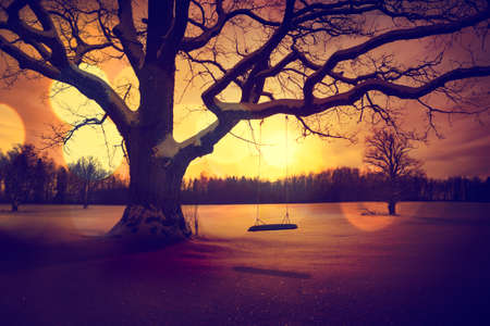 bare trees: Calm Winter Landscape with Abandoned Tree Swing. Loneliness Concept. Toned Photo with Bokeh.