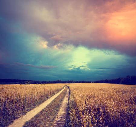 avena: Paisaje de verano con la avena Campo y carretera nacional en el fondo de cielo dramático. Tonificado y con filtro de fotos con espacio de copia. Foto de archivo