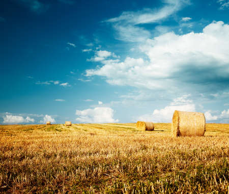 Beautiful Summer Farm Scenery with Haystacks. Field Landscape with Rolls and Sky. Agriculture Concept. Toned Photo with Copy Space. Stock Photo