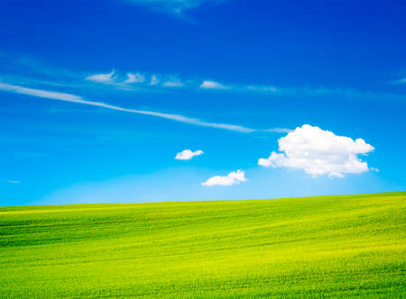 Wavy Green Field on the Background of Beautiful Blue Sky and White Clouds. Countryside Landscape in Summer. Peaceful and Calm Scenery. Toned Photo with Copy Space.