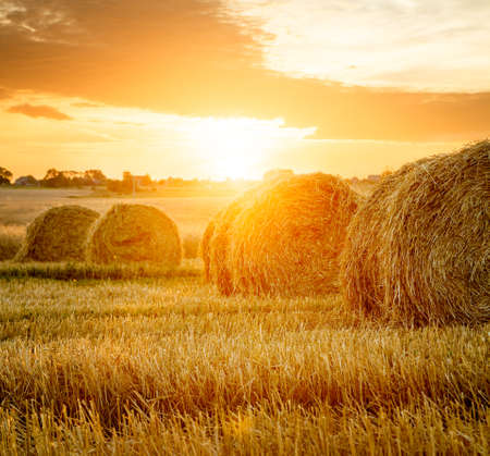 Summer Farm Field with Hay Bales on the Background of Beautiful Sunset. Agriculture Concept. Haystack Scenery. Toned and Filtered Photo with Copy Space. Banco de Imagens