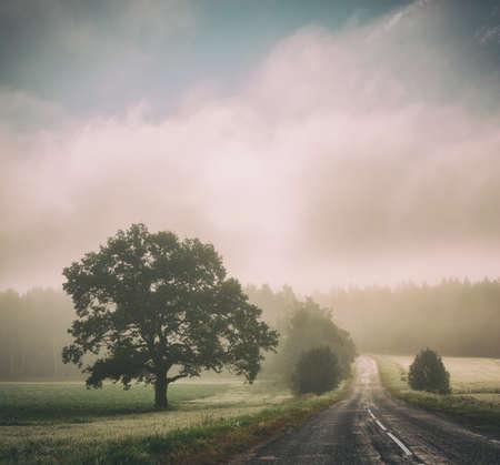 Herfst landschap met silhouetten van bomen en weg in mist. Schilderachtige ochtend landschap bij zonsopgang met mist. Gestemde en Gefilterde Instagram Gestileerde Foto met Exemplaarruimte. Mystieke aard achtergrond. Stockfoto
