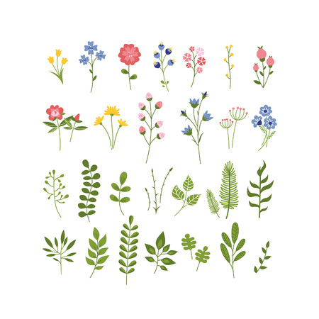 herbarium: Floral Hand Drawn Herbarium Collection. Flowers, Berries and Leaves Vector Set. Summer Blossom Illustration for Cards, Greetings, Banners, Mothers Day, Valentines Day, Birthday Cards, Invitations or Web.