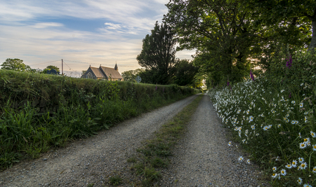 daisys: A deserted country path, with wild flowers growing in the verge and a quaint church on the horizon