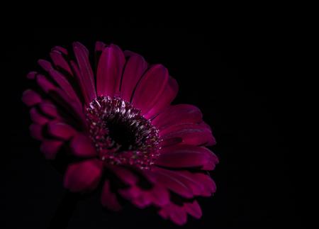 subtlety: A purple flower, subtlety lit, against a black background