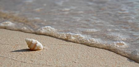 Single Spiral Shell on a Beach