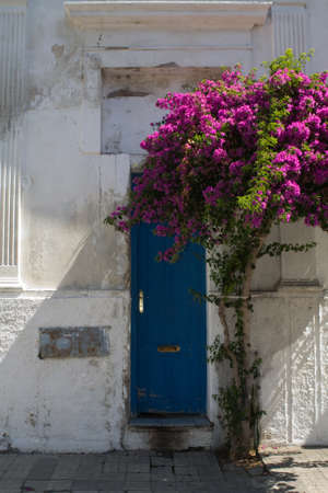 Blue Door With Pink Flowering Bush Colonia Uruguay